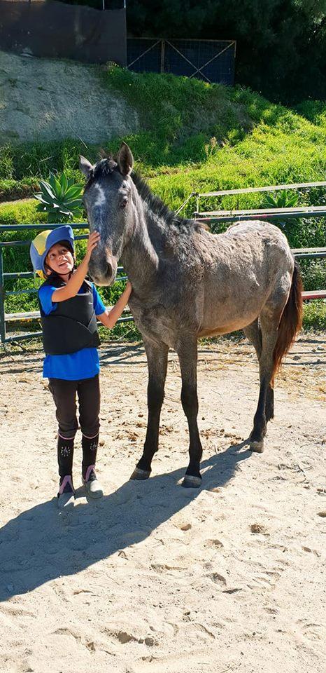 Meet & Ride Pony Experience